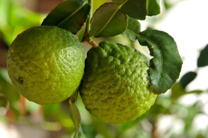 Kaffir Limes | Thai-Inspired Kaffir Lime Tart